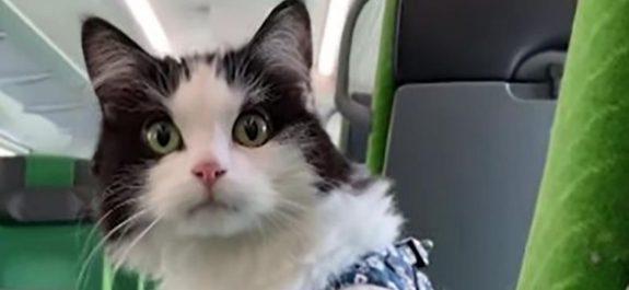 Gato viaja largas horas en tren