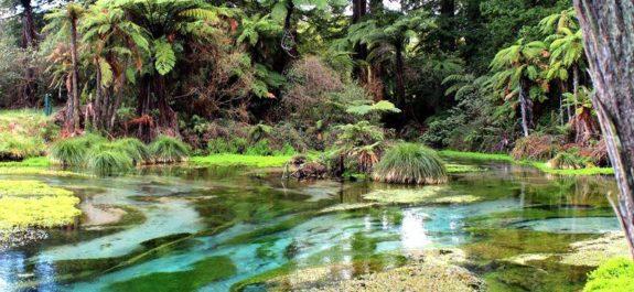 Rotorua turismo