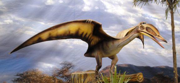 pterosauria-estudio