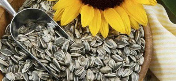 """Especialistas recomiendan consumir semillas de girasol para tratar diabetes Las semillas de girasol consisten en un alimento muy completo al ofrecer fibra, proteína, grasas saludables, vitaminas y minerales, entre los que destacan la vitamina E y el magnesio que aportan muchos beneficios para las personas que padecen Diabetes. """"Las Semillas de girasol al igual que el aceite que se obtiene de ellas, aportan omega 6, cuya ingesta nos ayuda a mejorar enfermedades como la diabetes y la artritis"""", señaló la española Ana Durá. Los especialistas señalan que dicha vitamina también ayuda a reducir el requerimiento de insulina y a evitar la aparición de complicaciones en la circulación de la sangre. El magnesio es el cuarto mineral más abundante en nuestro organismo y ayuda en la secreción de insulina, hormona producida por el páncreas que se encarga de regular la cantidad de glucosa de la sangre. Asimismo, el magnesio ayuda a transportar la glucosa al interior de las células. Un cuarto de taza de semillas de girasol USA proporciona 128 mg de magnesio, lo que equivale al 25 por ciento de valor diario recomendado. """"La vitamina E es un potente antioxidante que ayuda a mantener sanas las células y con ello evitar diversas enfermedades"""", señaló en un estudio la mexicana Fiorella Espinosa. Otros beneficios de las semillas de girasol USA es que contienen potasio, lo que ayuda a reducir riesgo de lesiones, son una gran fuente de fósforo, que favorece un buen funcionamiento cerebral y tienen una buena cantidad de calcio, por lo que son apropiadas para las personas intolerante a la lactosa y a los vegetarianos. Es un alimento tan versátil que se puede consumir con jugos, cereales, pan, en las sopas, cremas, ensaladas o verduras o, bien, directamente crudas o tostadas."""