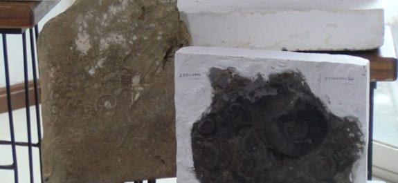 encuentran-fosiles-marinos-ciudad-victoria